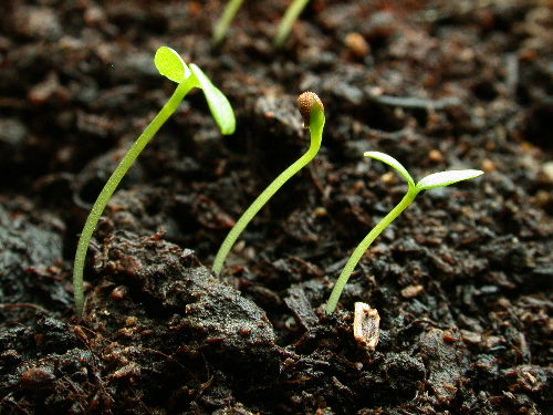 Seeding a Garden: Disaster or Triumph?